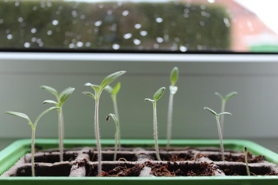plant-1290191_1280