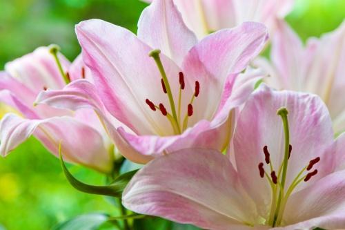 bloom-71264
