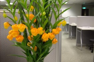 Milyen talajban fejlődik jól a lampionliliom (Sandersonia aurantiaca)?
