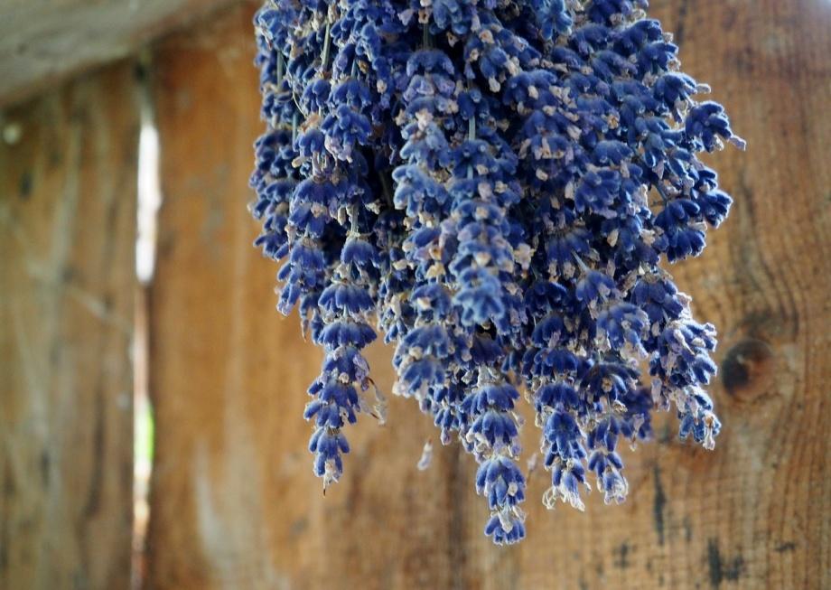 lavender-2711152_1280
