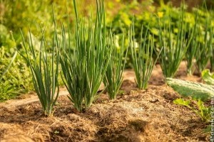 Permakultúra: a kert, amit nem kell gondozni