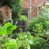Permakultúrában használatos növények