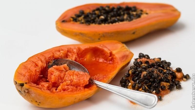 Hogyan termesszünk papaját magról? 1. rész