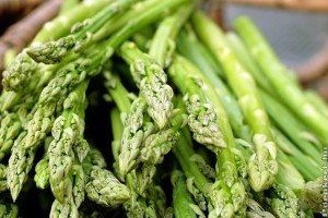 A közönséges spárga (Asparagus officinalis) termesztése