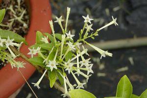 Különleges növények - 1. rész
