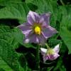 Különleges növények - 3. rész