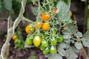Védjük meg zöldségeinket a kártevőktől!
