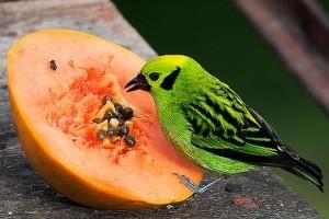 Hogyan védjük meg gyümölcseinket a madaraktól? - 1. rész
