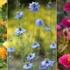 Színpompás virágágyás magról - most vessük el a magokat