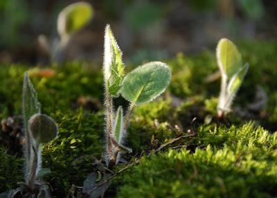 Fotoszintézis-fontossága