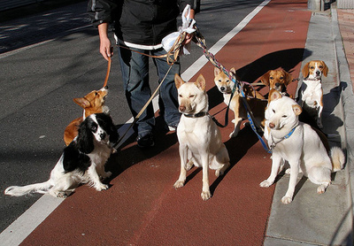 carpet_dogs_400