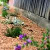 Hogyan díszít a talajtakarás?
