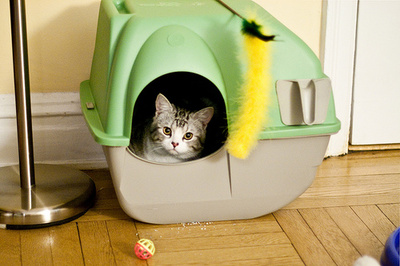Szódabikarbóna-macska-alom