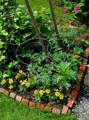 Kert-rovarriasztó-növények