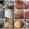 Hogyan készítsünk kagylós kollázst?