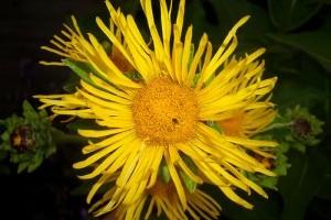 Elfelejtett gyógynövények 1. rész