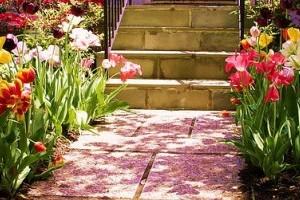 Milyen virágokat ültessünk a térkövek közé?