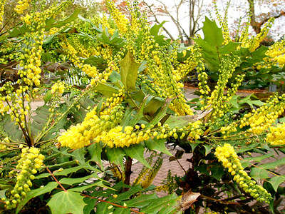 Egzotikus-növények