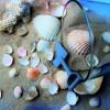 Ötletes dekorációk kagylókból!