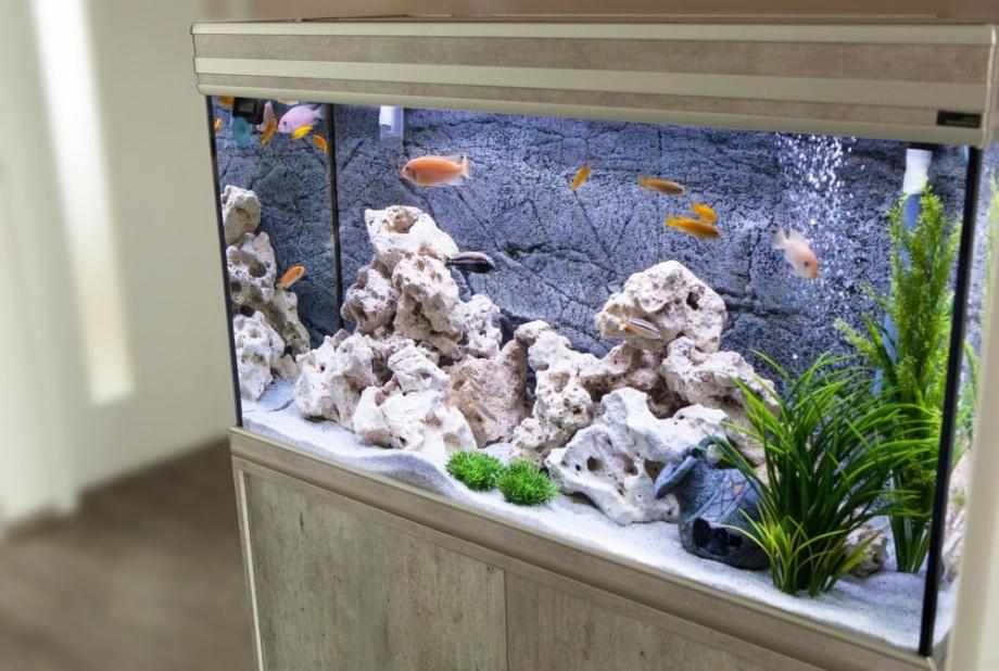 akvarium_feng_shui