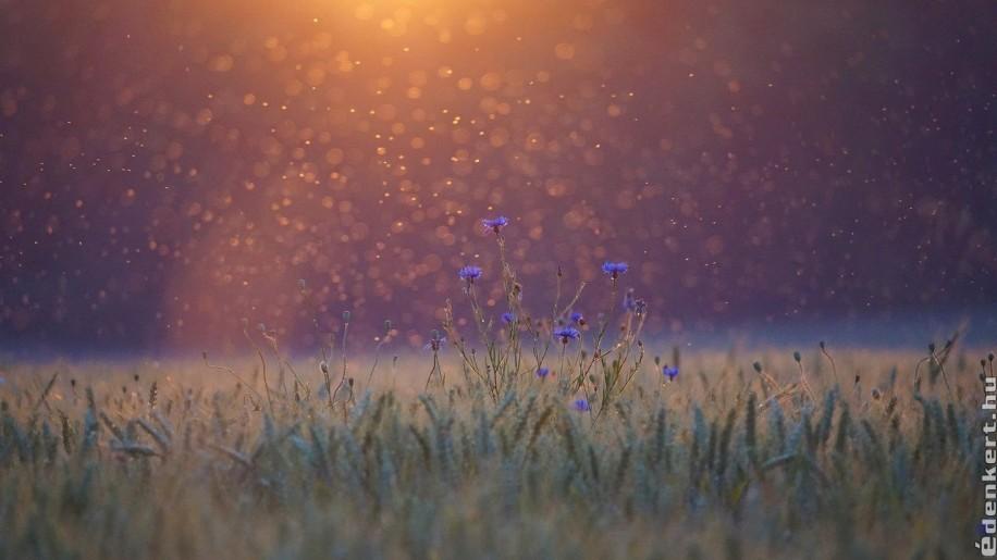 Környezetbarát szúnyogriasztás a kertben és otthonunkban