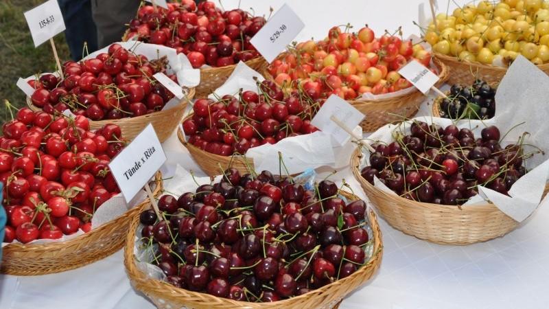 Miért hasznos a cseresznyefa? - 1. rész