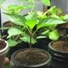 A beltéri kertészkedés művészete - 1. rész