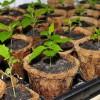 A beltéri kertészkedés művészete - 2. rész