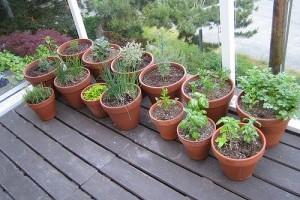 Mi szükséges a konténeres kertészkedéshez?