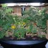 Hogyan kertészkedjünk a hidrokultúra segítségével?