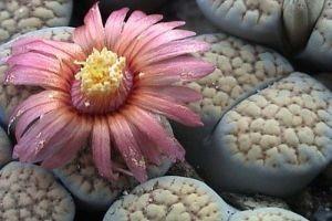 Ismét Kaktusz és pozsgásnövény kiállítás a Füvészkertben!
