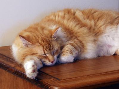 Immunrendszer-erősítő-alvás