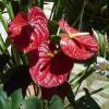 Ültessünk burmai virágoskertet!