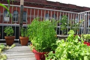 Hova ültessünk zöldségeket, ha nincs kertünk?