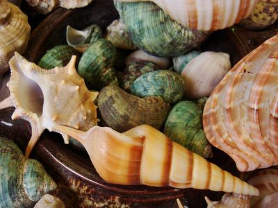 Díszítés-kagylókkal