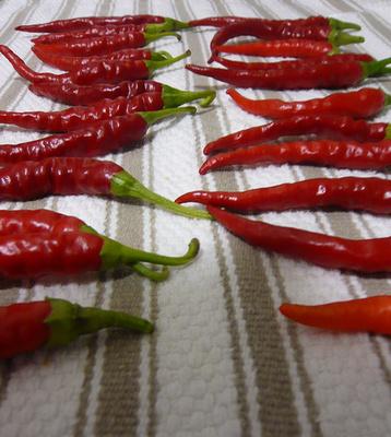 Cayenne-i paprika