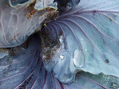 növényvédelem-vízsugárral