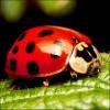 Ökológiai növényvédelem a kertben!