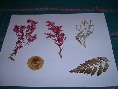 Préselt-virágok