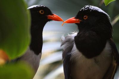 Szerelmes-madarak