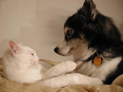 Kutya-macska