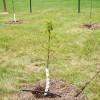 Mi a függőleges talajtakarás?