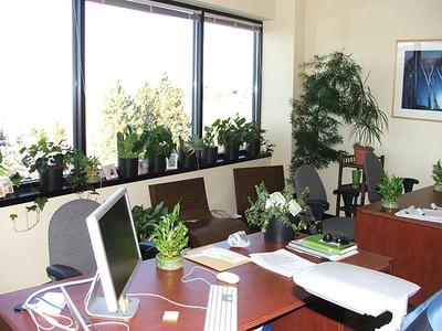 Jótékony-szobanövények