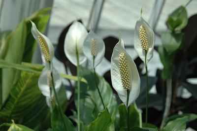 Gyógyhatású-szobanövény