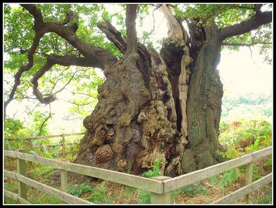 Fák-cserjék-védelme