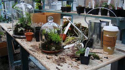 Minikert-növények-ültetése