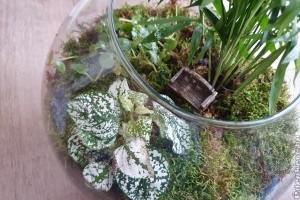 Florárium: készítsünk üvegbe zárt minikertet!