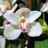 Az orchideák benti termesztése