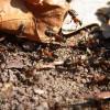 Hangya vagy termesz - Mi a különbség?
