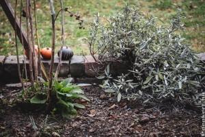 Az őszi munkálatok örömei